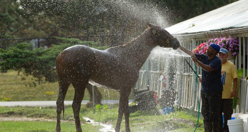 WEGcares Horse