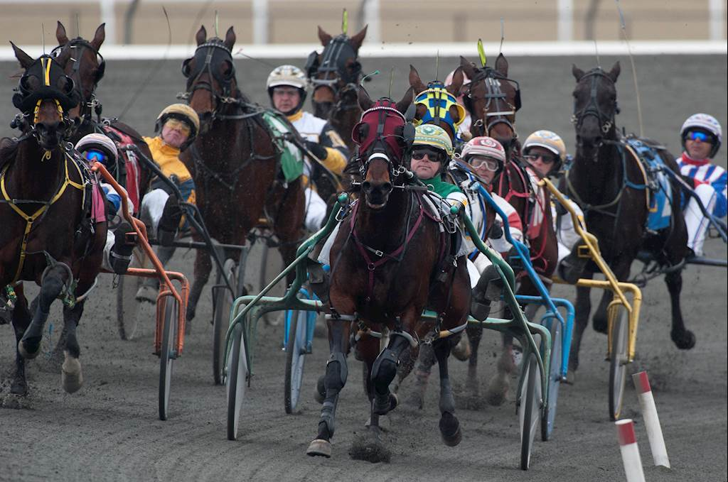 Standardbred horses racing at Woodbine Mohawk Park