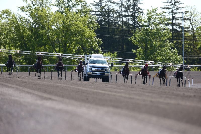 New Woodbine slanted starting gate used during recent qualifiers.