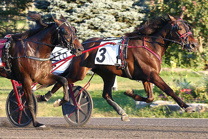 Duly Resolved digs in to capture his William Wellwood elimination at Woodbine Mohawk Park on September 2, 2021. (New Image Media)