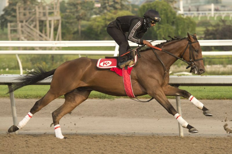 Haddassah is one of five horses on track to race in this year's Queen's Plate for trainer Kevin Attard.