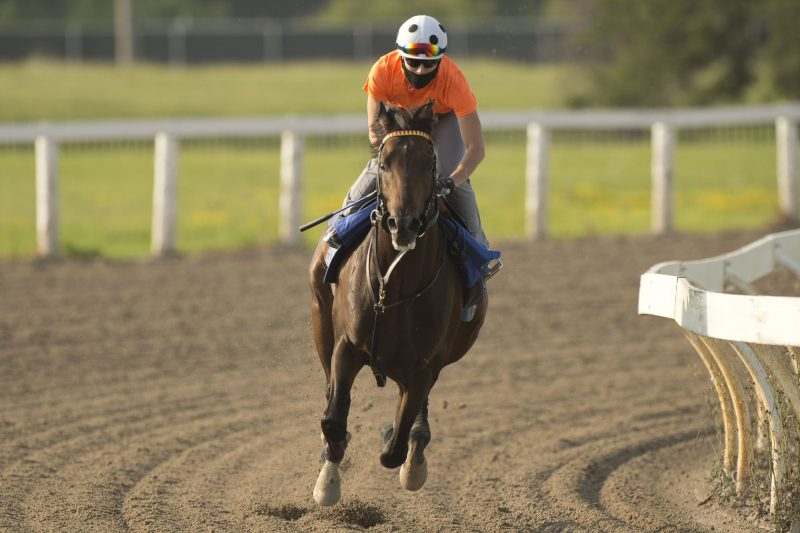 Tidal Forces and Emma-Jayne Wilson will team up in Sunday's $1 million Queen's Plate.