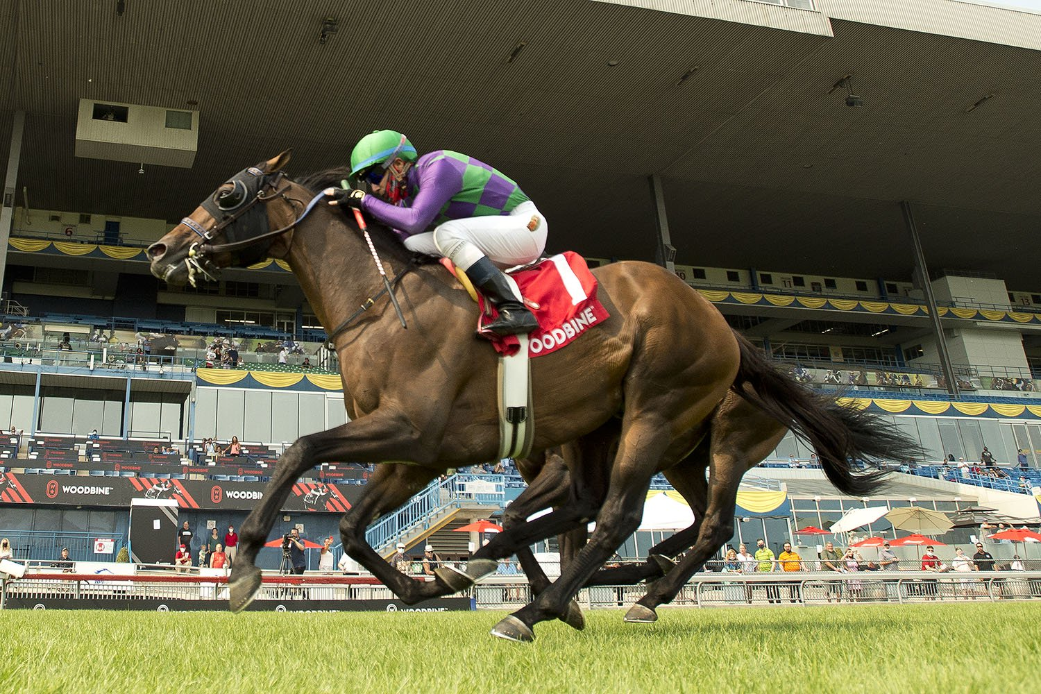 Avie's Flatter and jockey Luis Contreras winning the $175,000 Connaught Cup (Grade 2) on Sunday, July 18 at Woodbine Racetrack. (Michael Burns Photo)