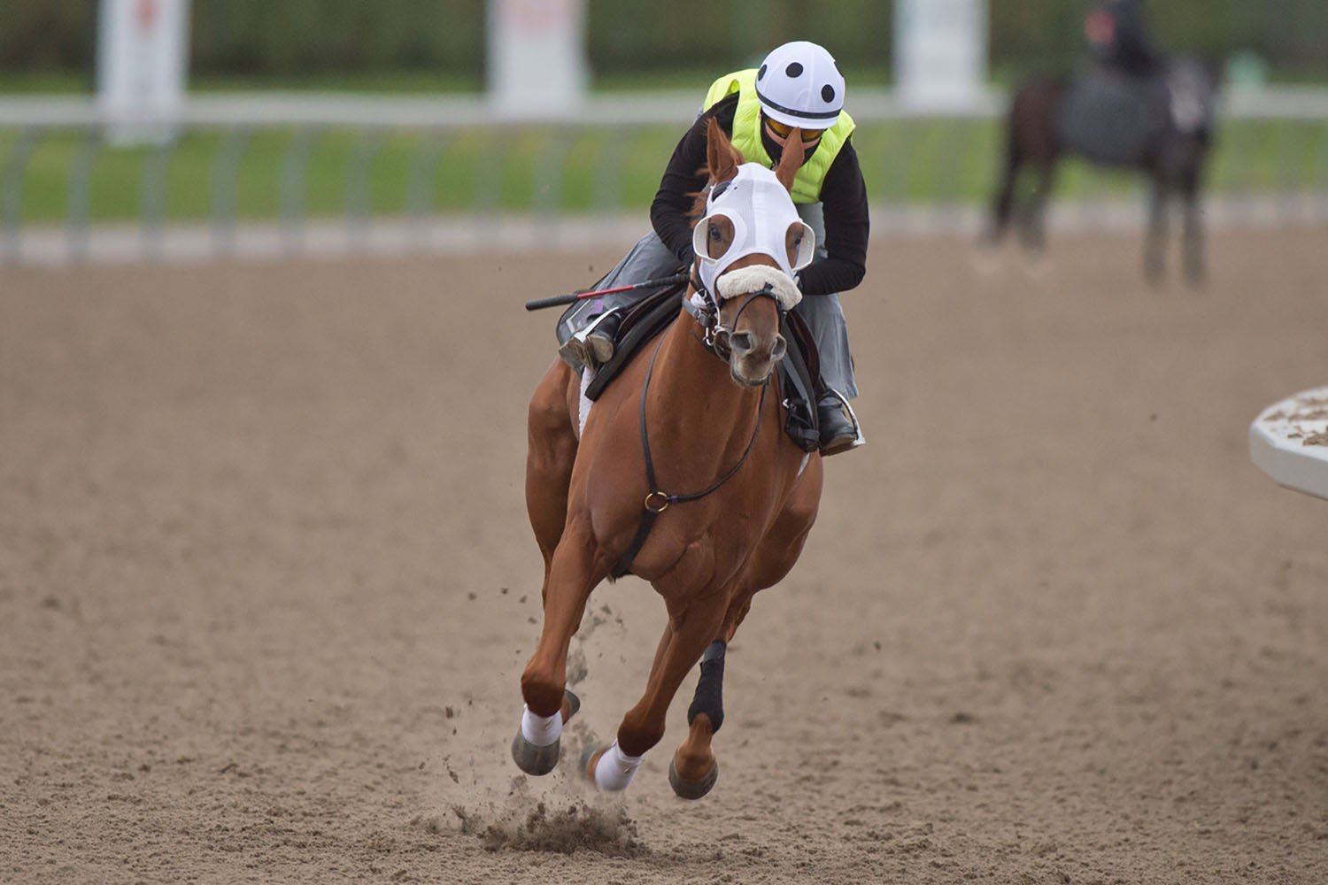 English Conqueror breezing at Woodbine under jockey Emma-Jayne Wilson in preparation for the Breeder's Stakes. (Michael Burns Photo)
