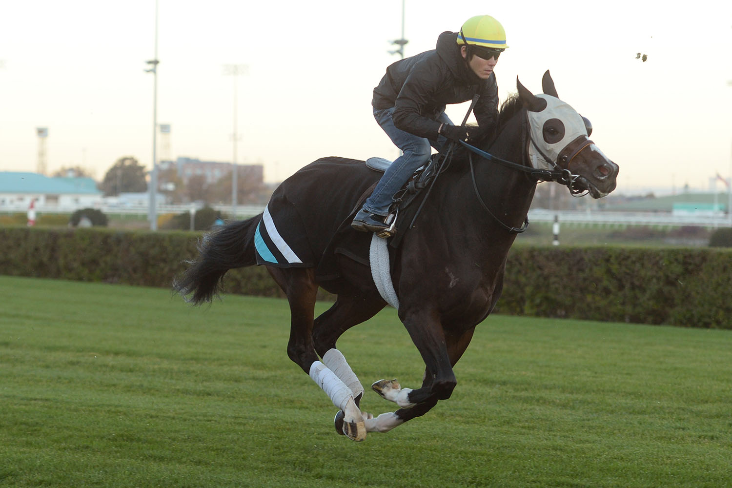 Mighty Heart preparing for the Breeders' Stakes under Daisuke Fukumoto, at Woodbine Racetrack. (Michael Burns Photo)