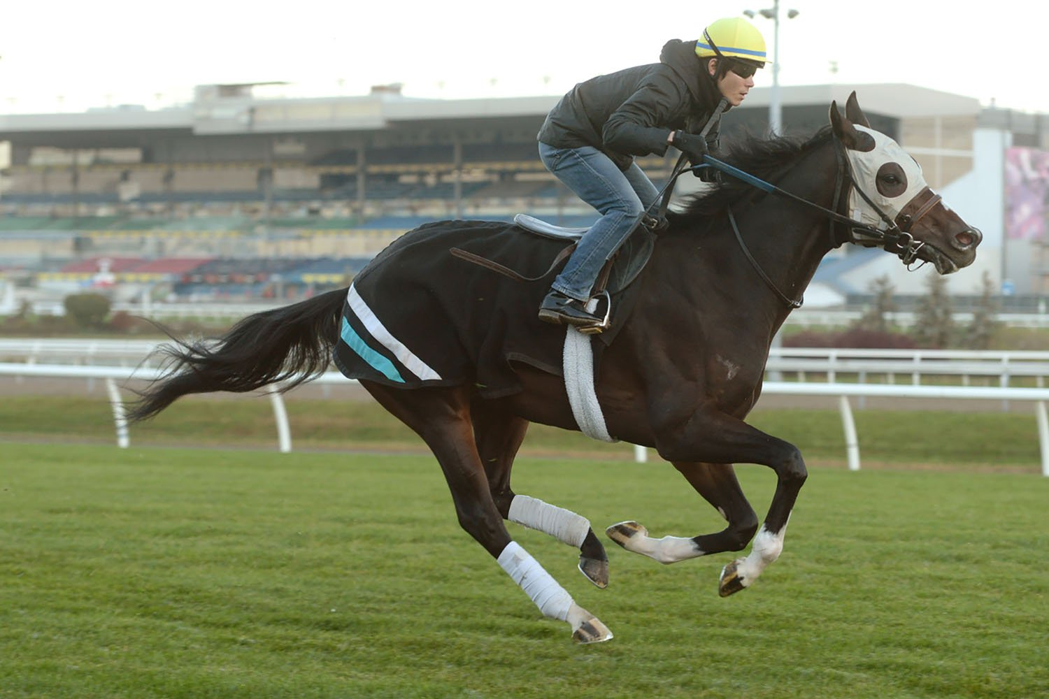 Breeders' Stakes favourite Mighty Heart breezing at Woodbine Racetrack with jockey Daisuke Fukumoto in advance of the final leg of the OLG Canadian Triple Crown. (Michael Burns Photo)
