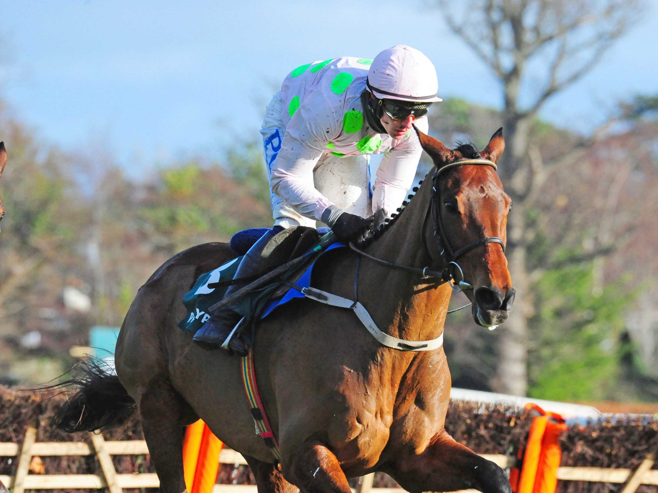 CHACUN POUR SOI and Paul Townend winning the Paddy's Rewards Club Steeplechase (Grade 1).
