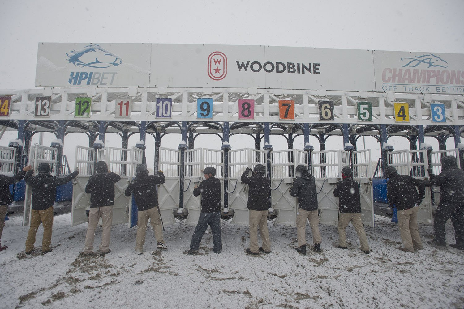 The Woodbine gate crew close the starting gate on the final day of the Thoroughbred race meet at Woodbine Racetrack. (Michael Burns Photo)