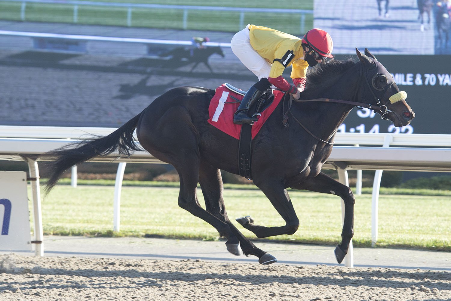 Derzkii, in rein to Emma-Jayne Wilson, closing out his rookie campaign last year with a November 12 victory at Woodbine Racetrack. (Michael Burns Photo)