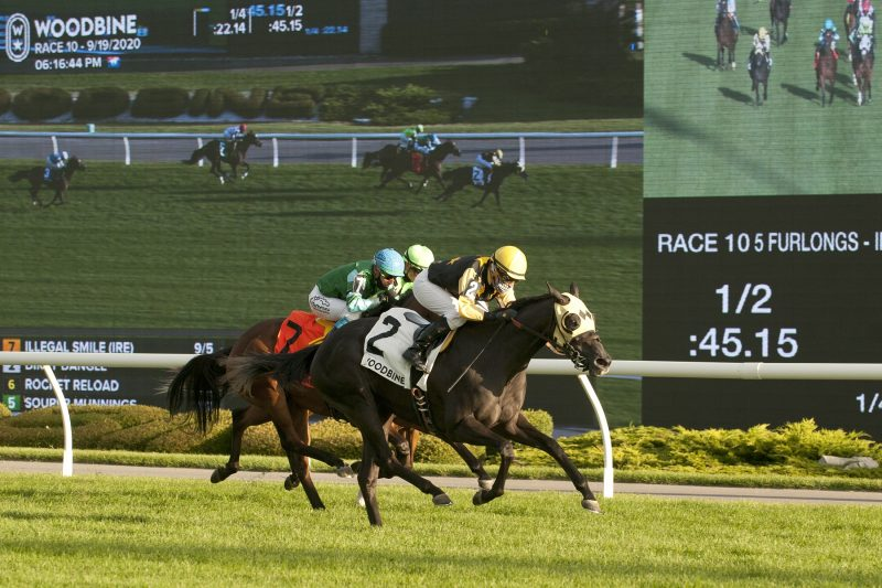 Dirty Dangle, under a heads-up ride from Sheena Ryan, closed resolutely to score by 1 ¼ lengths in the Woodbine Cares Stakes at Woodbine Racetrack on September 19, 2020. Michael Burns photo.