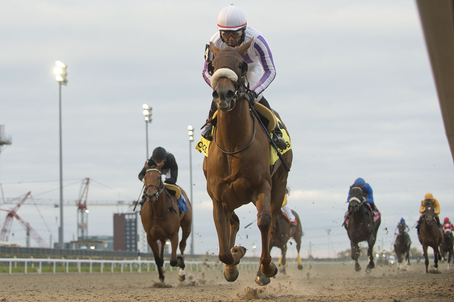 Dreaming of Drew and jockey Patrick Husbands winning the 75th running of the $250,000 Princess Elizabeth Stakes on Saturday, Oct. 31 at Woodbine Racetrack. (Michael Burns Photo)