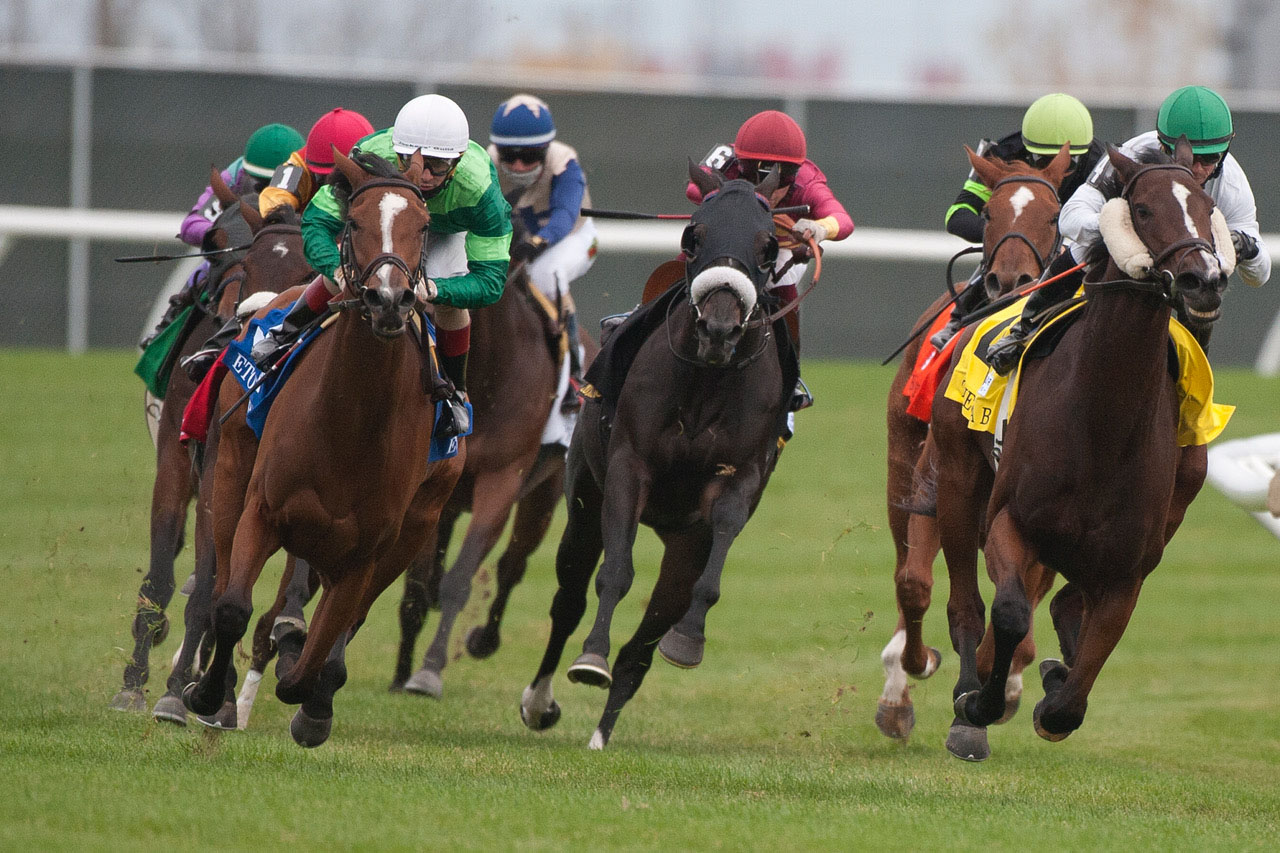 The field for the E.P. Taylor Stakes turns into the stretch. (Michael Burns Photo)
