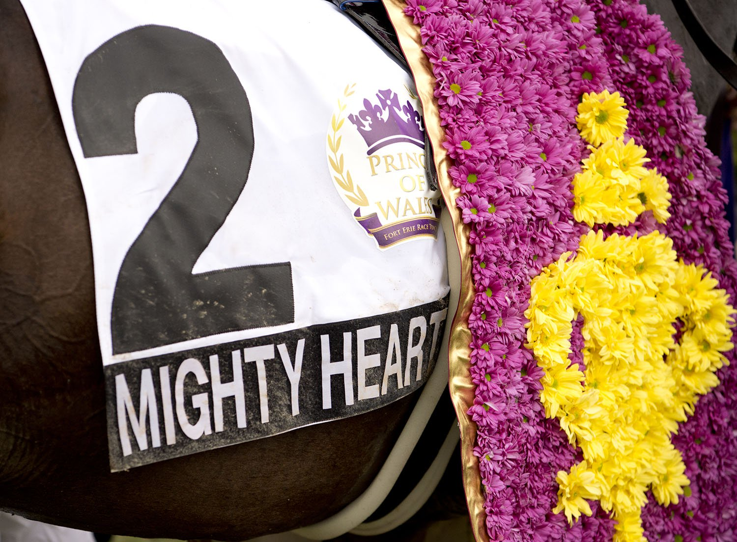 A close up view of Mighty Heart wearing the Prince of Wales floral stole created by The Monarch Florists. (Michael Burns Photo)