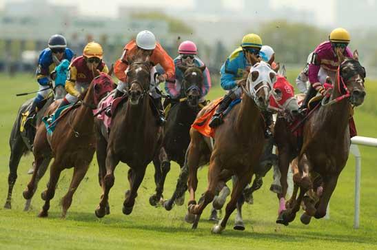 Thoroughbred horses racing at Woodbine racetrack