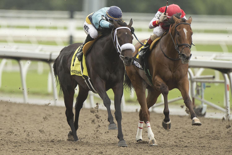Golden Vision and jockey Omar Moreno winning the $100,000 Ballade Stakes on Saturday, July 17 at Woodbine Racetrack. (Michael Burns Photo)