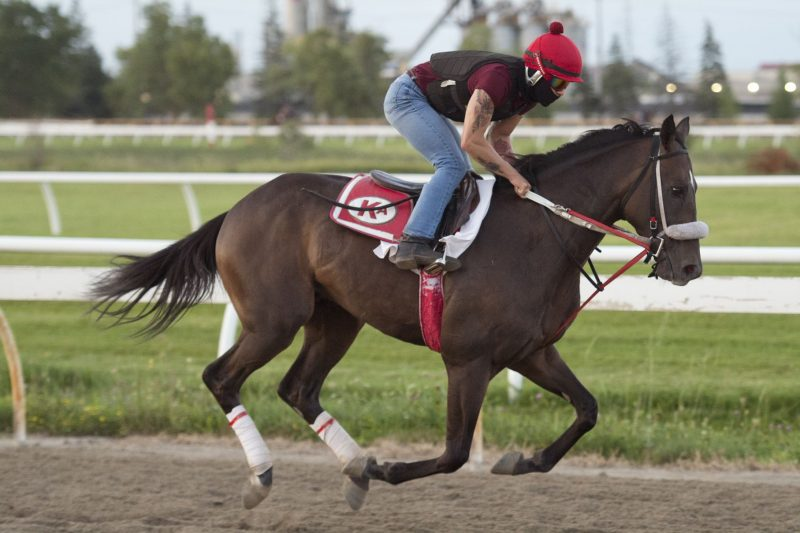 H C Holiday will look to give owner Ivan Dalos his first Queen's Plate victory.