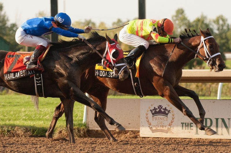 Haddassah holds off Harlan Estate to win Tuesday's Prince of Wales at Fort Erie.