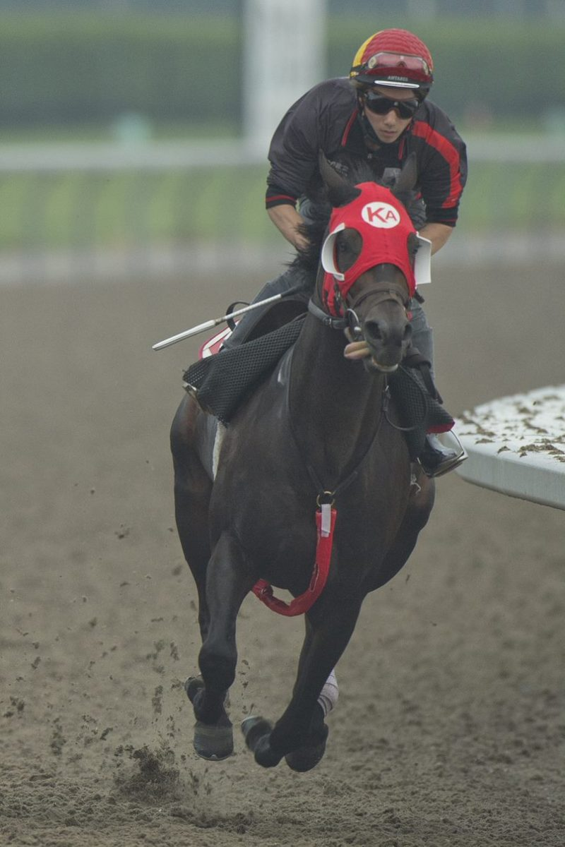 After starting his career in California for Peter Eurton, Harlan Estate looks to capture Canada's most famous race in Sunday's Queen's Plate.