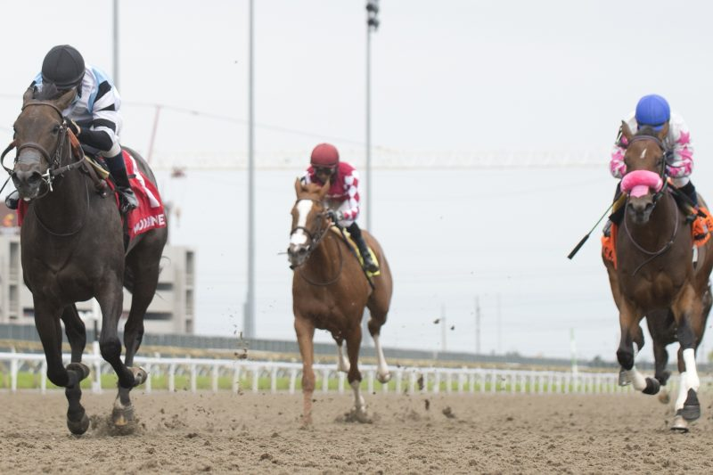 Jockey Antonio Gallardo guides the Mark Casse trained Diabolic to victory in the $125,000 My Dear Stakes, Saturday at Woodbine Racetrack in Toronto. Michael Burns Photo.