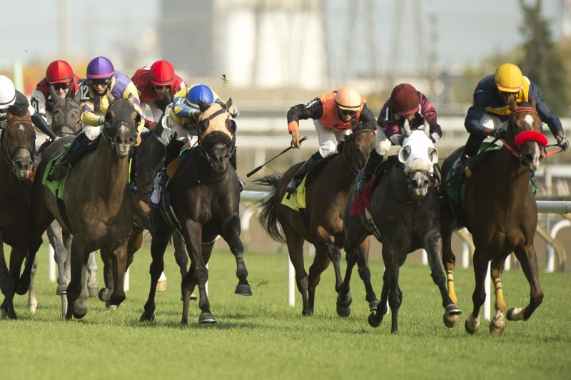 Jockey Patrick Husbands guides Forester's Fortune to victory on September 27, 2020 at Woodbine Racetrack in Toronto. Michael Burns Photo.