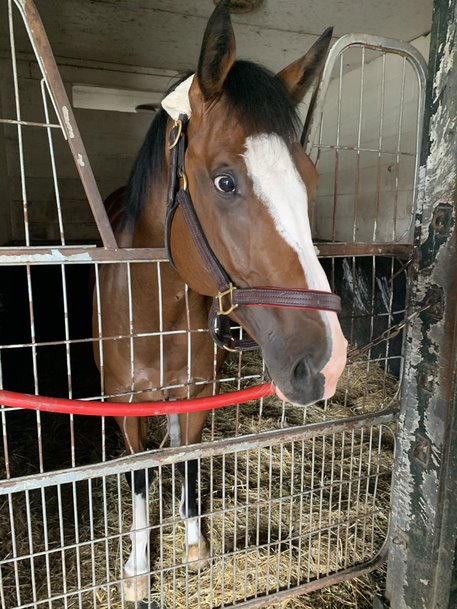 Joshua Attard's Keep Grinding is currently listed at 25-1 in the Queen's Plate Winterbook.