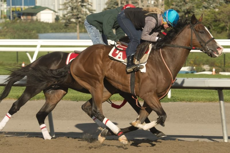 Keep Grinding works out prior to the Breeders Stakes at Woodbine. (Michael Burns Photo)