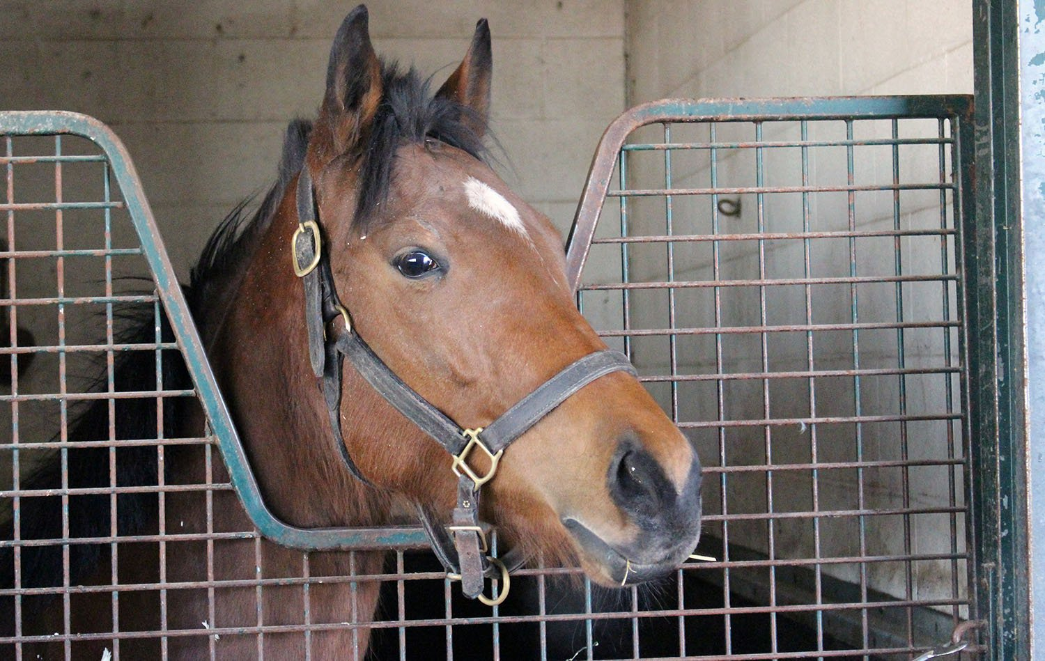 d15edd0e16ea5f Tony Gattellaro trainee Liddyup settles in her stall on the backstretch at  Woodbine Racetrack. (Keith McCalmont Photo)