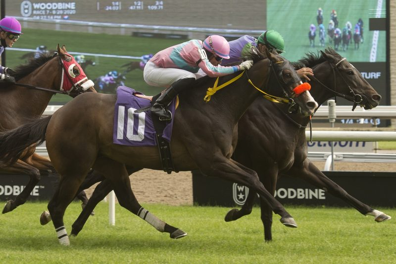 Marten River wins the seventh race on August 28, 2020 at Woodbine Racetrack in Toronto. Photo by Michael Burns.
