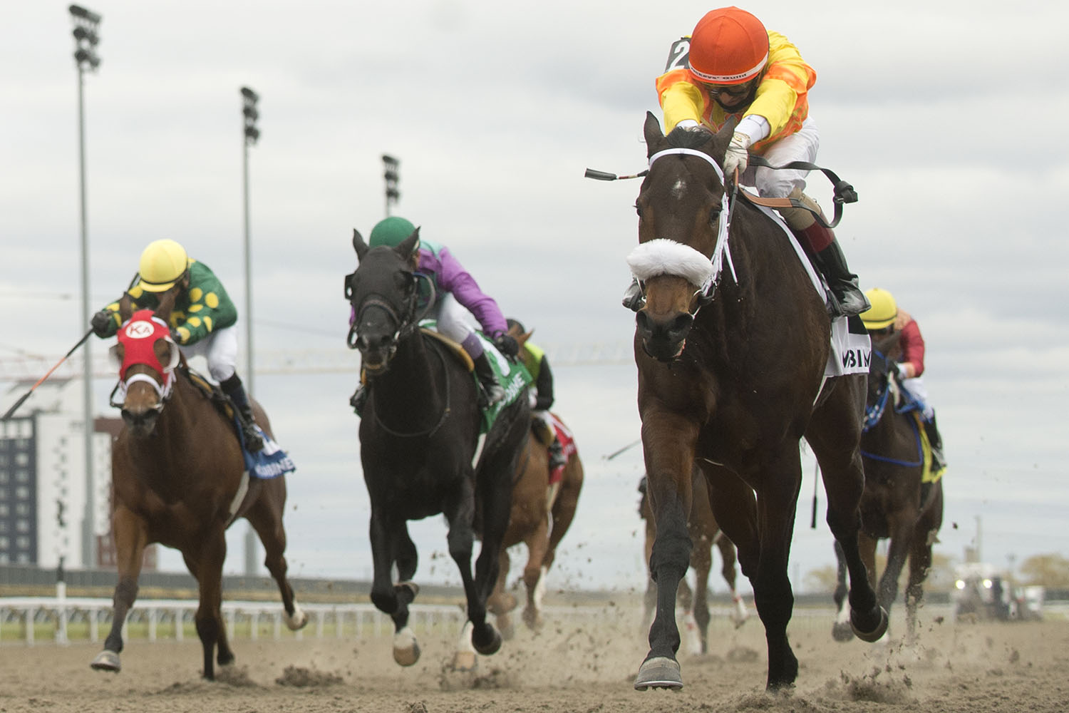 Merveilleux and jockey Rafael Hernandez winning the $150,000 Ontario Damsel Stakes on Saturday, Nov. 21 at Woodbine Racetrack. (Michael Burns Photo)
