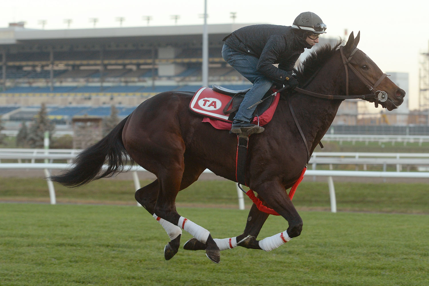 Merveilleux breezing at Woodbine in preparation for the Wonder Where Stakes. (Michael Burns Photo)