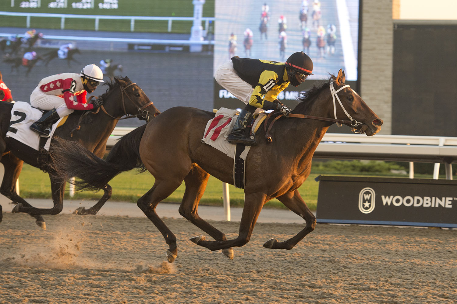 Ms Wicked winning the seventh race on November 8 at Woodbine Racetrack. (Michael Burns Photo)
