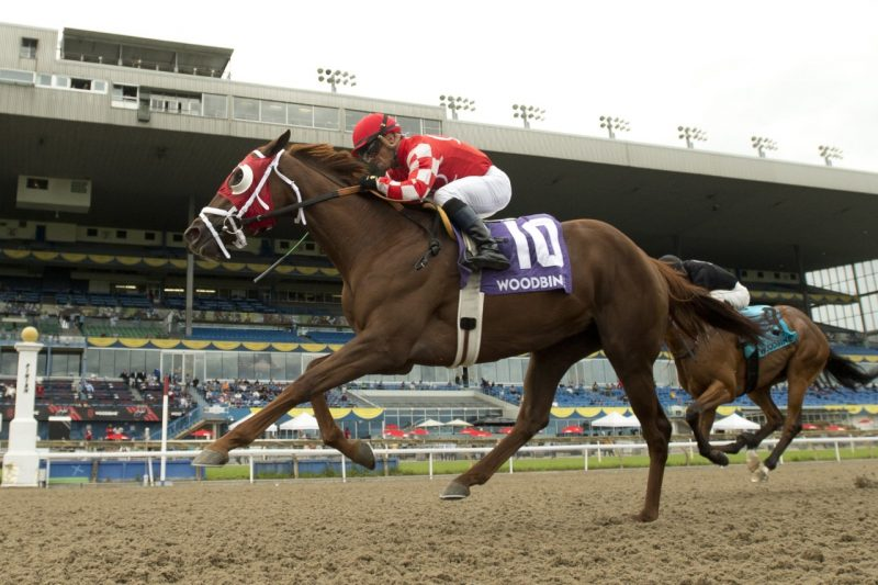 Munnyfor Ro, picture winning the Woodbine Oaks, could be supplemented to the 162nd Queen's Plate.