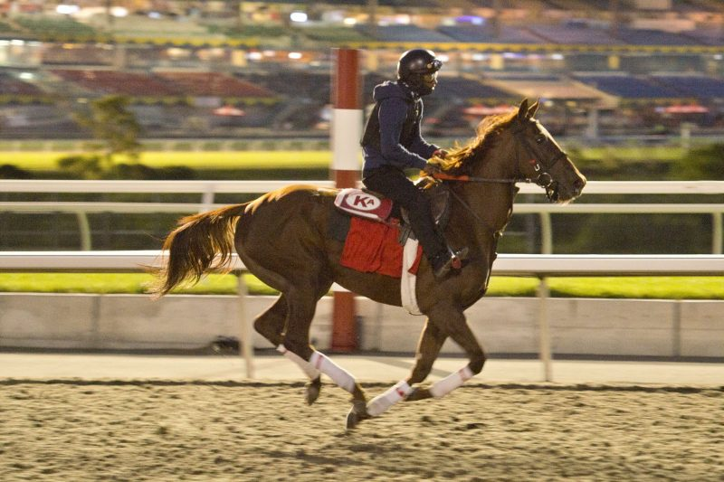 Woodbine Oaks champion Munnyfor Ro is heading to the Queen's Plate.