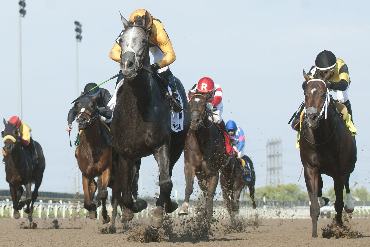 Outadore and jockey Justin Stein winning the $125,000 Woodstock Stakes on Sunday, June 20 at Woodbine Racetrack. (Michael Burns Photo)