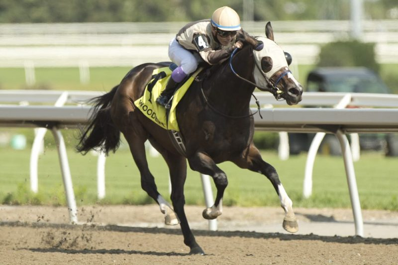 Queen's Plate champ Mighty Heart cruising to victory on July 1 at Woodbine. (Michael Burns Photo)