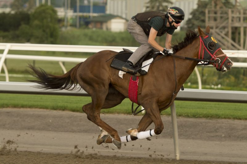 Riptide Rock will look to give trainer Sid Attard his first Queen's Plate victory.