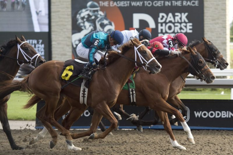 Shamateur sticks a nose in front of Stowaway and Stronger Together to capture a September 5th race at Woodbine. (Michael Burns Photo)