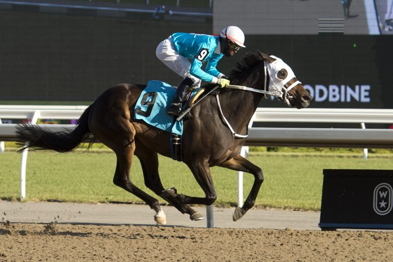 Silent Causeway under Jockey Patrick Husbands is victorious in race 11 on June 14, 2020 at Woodbine Racetrack in Toronto. Photo by Michael Burns.