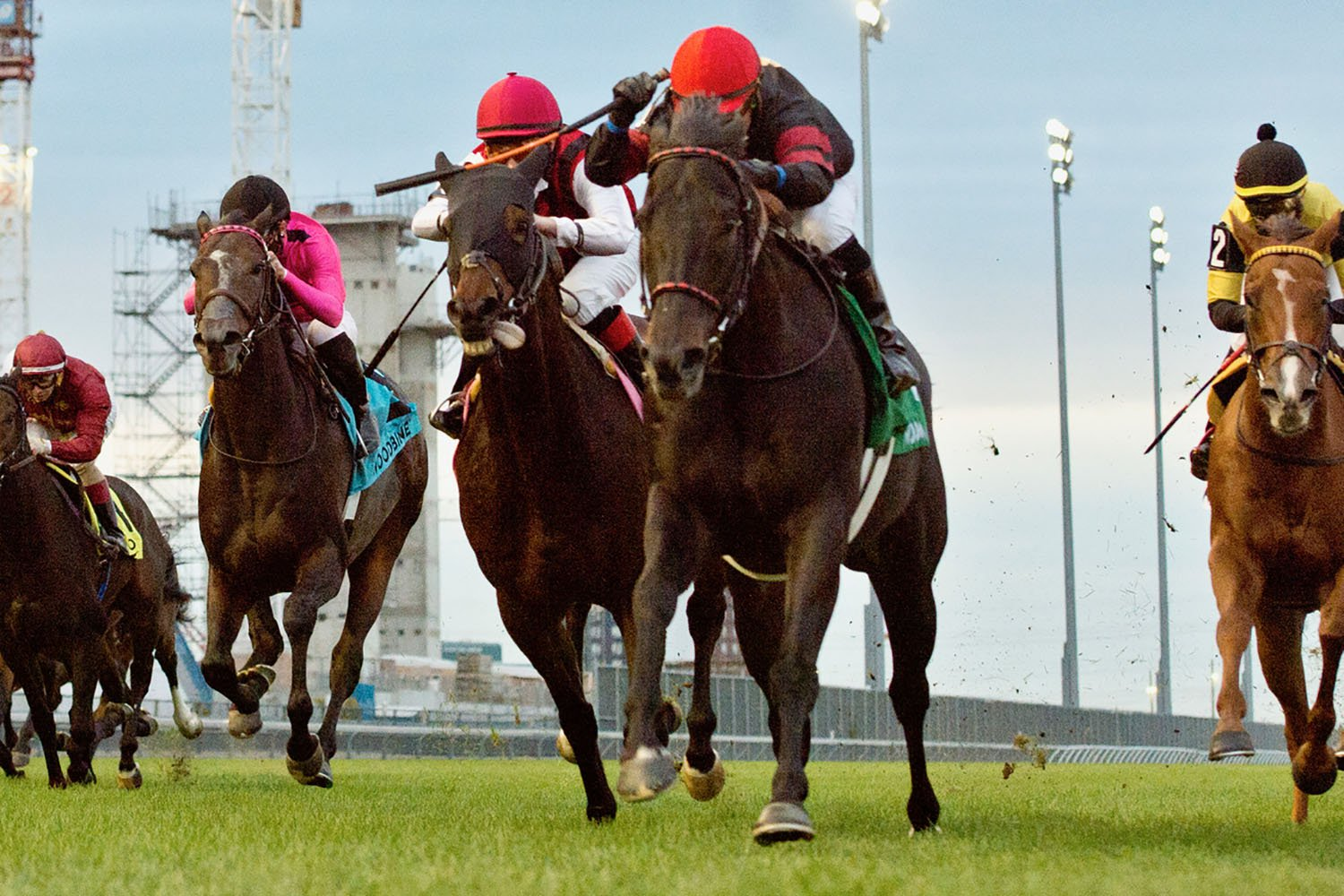 Silent Poet and jockey Justin Stein winning the $250,000 Nearctic Stakes (Grade 2) on Sunday, Oct. 18 at Woodbine Racetrack. (Michael Burns Photo)