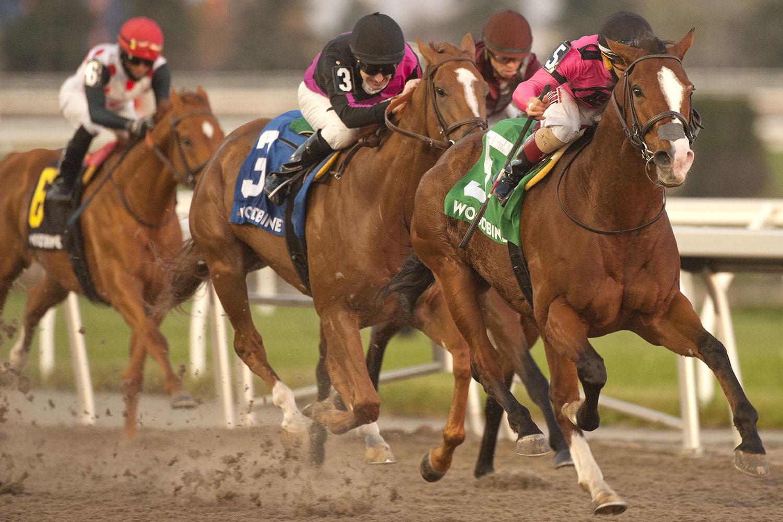 Skywire and jockey Rafael Hernandez winning the $175,000 Autumn Stakes (Grade 2) on Saturday, Nov. 7 at Woodbine Racetrack. (Michael Burns Photo)