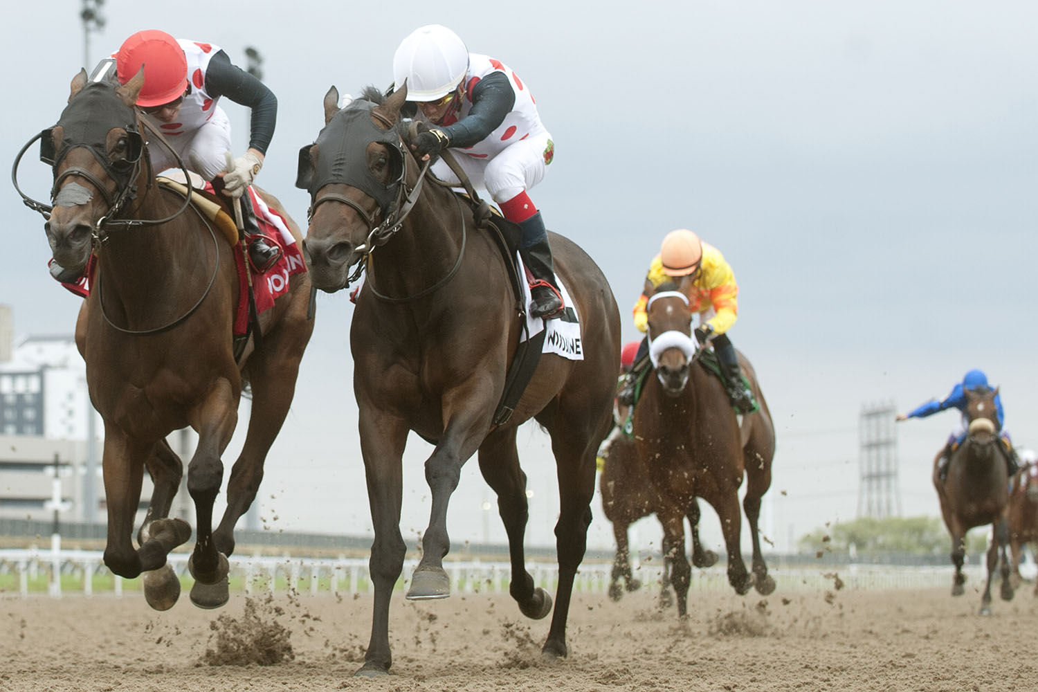 A 1-2 finish for Live Oak Plantation in the $150,000 Trillium Stakes (Grade 3) as Souper Escape (#2 inside) and jockey Luis Contreras nosed out Crystal Glacier and Kazushi Kimura in a photo finish on Saturday, June 26 at Woodbine Racetrack. (Michael Burns Photo)