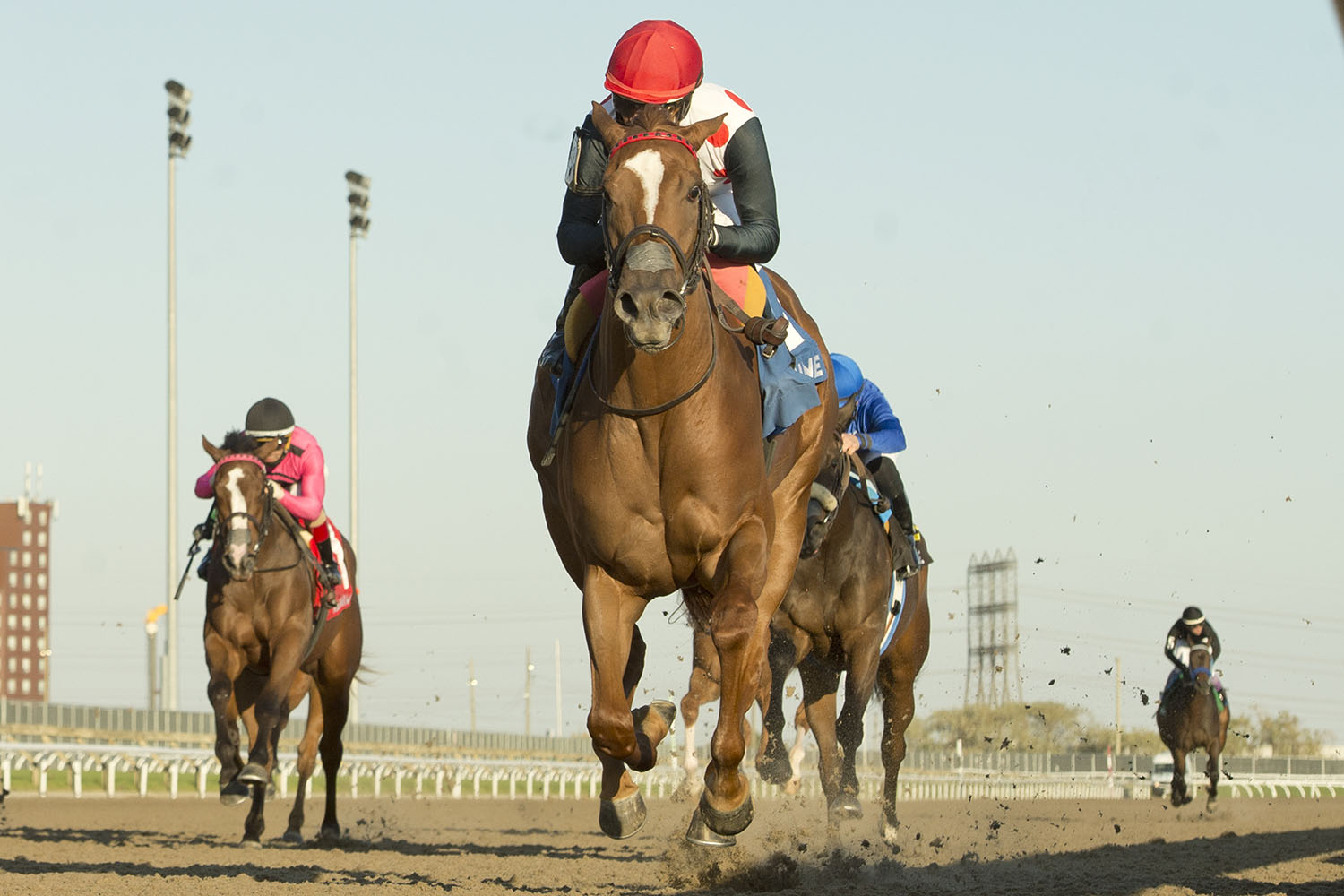 Souper Sensational and jockey Patrick Husbands winning the $100,000 Glorious Song Stakes on Saturday, Oct. 17 at Woodbine Racetrack. (Michael Burns Photo)