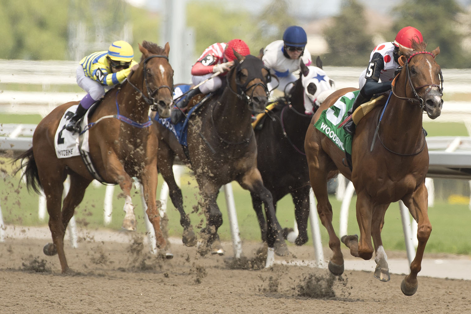 Souper Stonehenge and jockey Patrick Husbands winning the $150,000 Jacques Cartier Stakes (Grade 3) on Sunday, June 20 at Woodbine Racetrack. (Michael Burns Photo)