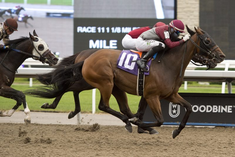 Timeskip under Jockey Leo Salles prevails in race 11 on August 1, 2020 at Woodbine Racetrack in Toronto. Photo by Michael Burns.