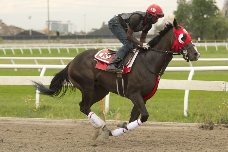 Truffle King will look to become the first maiden since 2000 to win the Queen's Plate.
